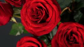 玫瑰花艺顶级制作